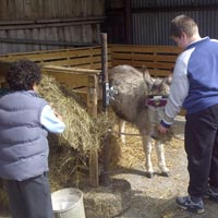 Feeding Donkeys